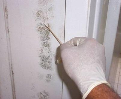 Mold swab testing